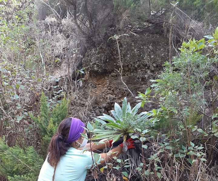 LIFE IP AZORES NATURA | News about field work of  Biosfere Reserve of La Palma
